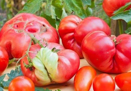 El Gobierno impulsa la venta de alimentos 'feos'
